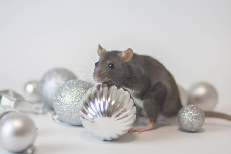 The rat is gray. The mouse is a symbol of the Chinese Asian New Year. Gray rat on a silver decorative decoration for a Christmas tree. Pink ears and nose