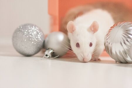 The rat is white, a symbol of the new year, the Chinese calendar, among New Years toys. silver balls