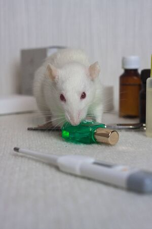 White experimental rat with a bottle of medicine. Pharmaceutical experiments. symbol of chinese new year Stockfoto