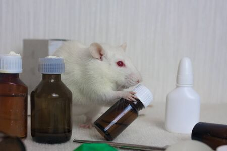 White rat and glass bottle with medicine. Laboratory experiments Symbol 2020. A mouse hugs a bottle. Chinese New Year