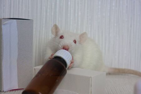 White rat and glass bottle with medicine. Laboratory experiments Symbol 2020. Chinese New Year