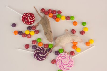 Baby rats are small fluffy and cute among bright, mouth-watering and colored sweet sweets. 2020 Chinese calendar. Asian New Year.