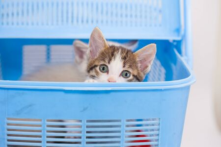 Little kitten is hiding in a blue box. gift Banque d'images - 138460721