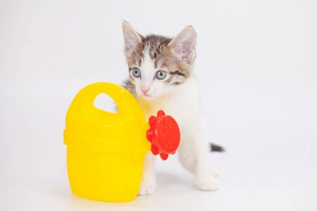 Cute kitten with a yellow watering can. Agricultural assistant. watering the garden and caring for plants