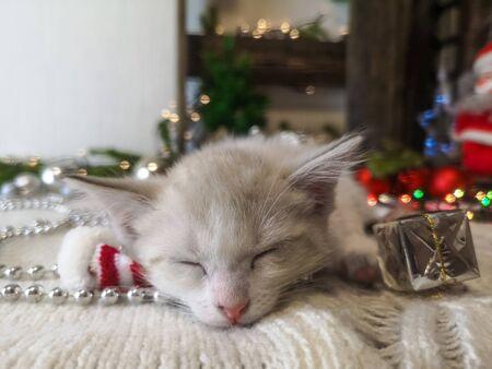 Sleep sweet concept. Beige kitten sleeps sweet baby sleep. cute