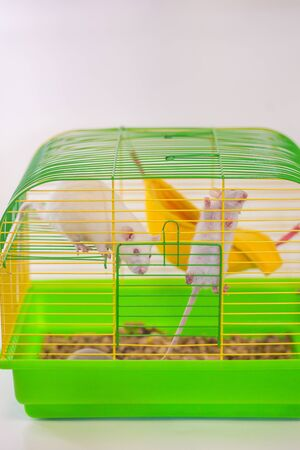 A rat in a green cage looks through the bars to freedom. place of imprisonment. 2020 symbol of the Chinese calendar on white background