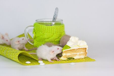 Rats on a food table with a transparent mug in bright clothes. Nutrition and Diet