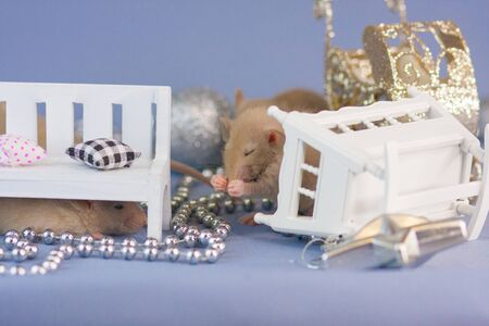 Rat with silver toys on a blue background. with a wooden white cradle