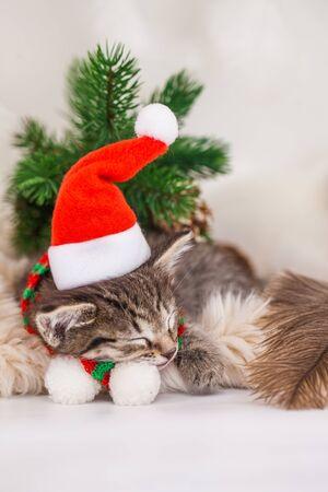 A kitten in a santa claus hat sleeps with newborn rats. Little children sleep on new year's eve Imagens