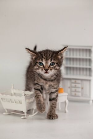 Cute kitten in a doll room with small furniture and cheese.