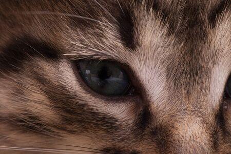 Kitten portrait. Cute dark kitten with big eyes. Imagens