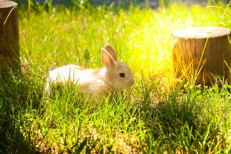 Easter bright little bunny. on the grass lawn