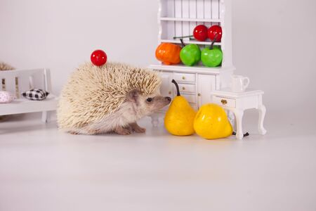 Positive attitude and good mood. Have a nice day concept. Cute African Dwarf Hedgehog. yellow pear on a white background Banque d'images