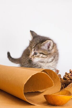 Kitten on parchment paper. Tabby kittenKitten on parchment paper. Tabby kitten