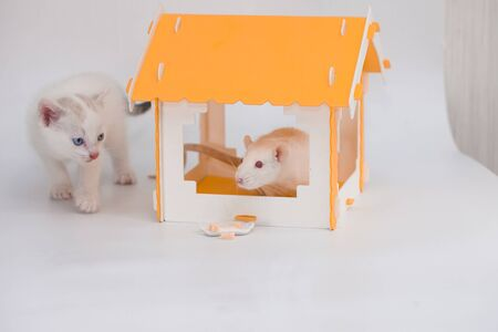 Cat and mouse. Tom and Jerry. Kitten guards a big mouse in a yellow house on a white background