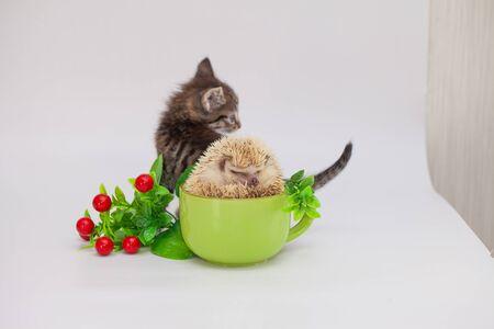 Kitten and hedgehog in a tea mug. Positive mood and good mood. Morning coffee Archivio Fotografico