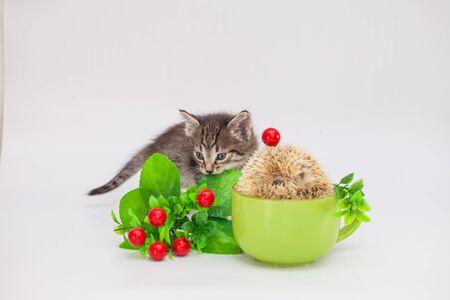 Kitten and hedgehog in a tea mug. Positive mood and good mood. Morning coffee