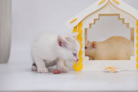 Cat and mouse. Tom and Jerry. Kitten guards a big mouse in a yellow house on a white background Фото со стока