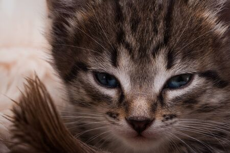 Kitten portrait. Close cat's eyes