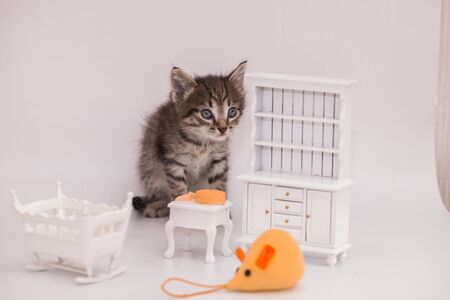 Kitten and toy mouse on a white background
