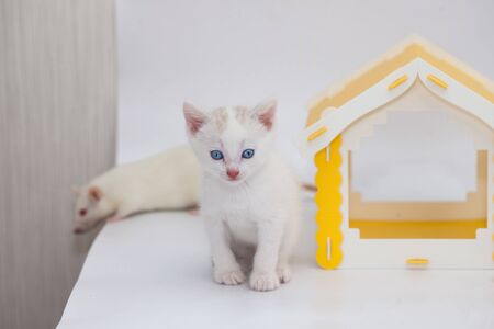 Small and cute kitten in a yellow house on a white background. Positive mood and a good day. Self isolation concept