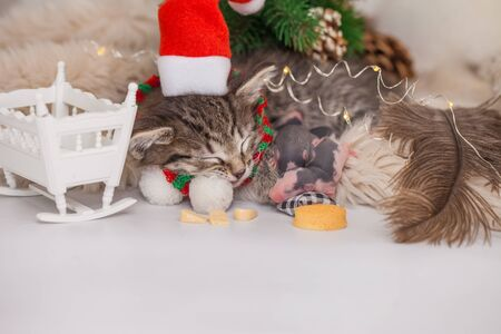 Sleeping kitten and sleeping baby rats. Lullaby for the baby. Cute kitten and his rat friends in santa hat sleep sweetly together