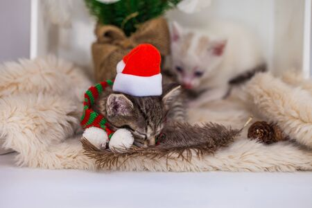 Sleeping kitten. Lullaby for the baby. Cute kitten in santa hat sleeps sweetly Фото со стока