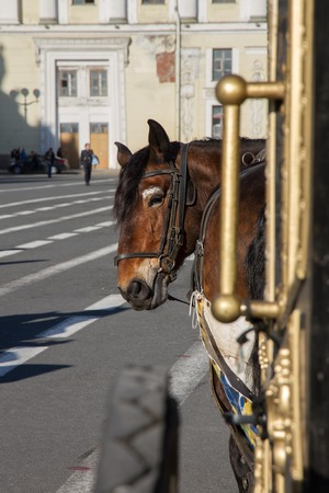 blinders: A horse harnessed to a carriage on the square