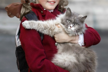 fondle: girl with gray cat in the hands