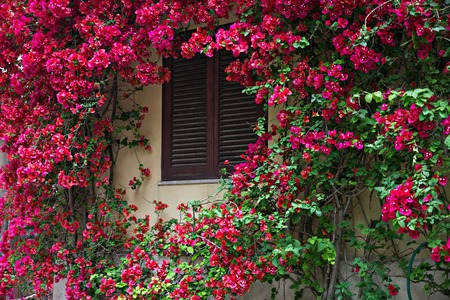 Italian Windows with shutters and flower decoration