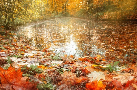 Yellow and red autumn leaves lie on the shore of a pond