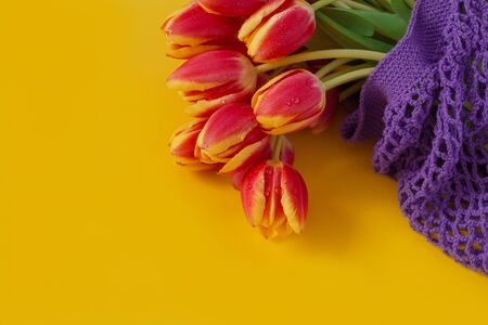 fresh flowers tulips red yellow color with water drops lie in purple ecobag on yellow background