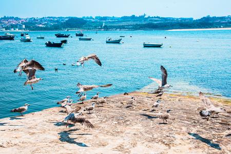Fishing boats on the Douro River. Porto. Portugal 免版税图像