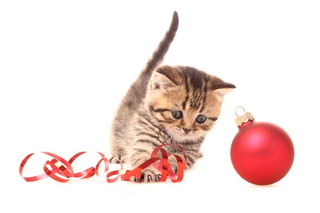 Kitten playing with Christmas Decorations photo