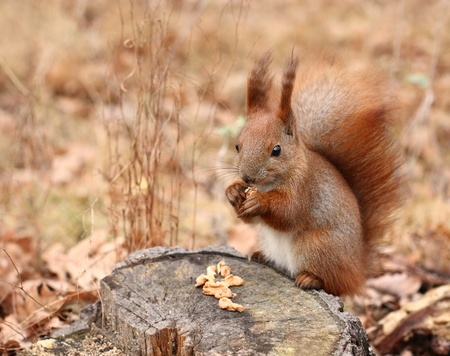Squirrel on a tree stump in a park