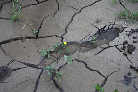 heavy footprint right on a muddy wet land Stock Photo