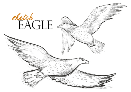 Freehand Sketch Of Flying Eagle. Hand Drawn On White Background. Vector Illustration Illustration