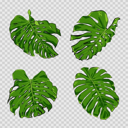 Vector tropical palm leaves. Jungle leaves set isolated on transparent background