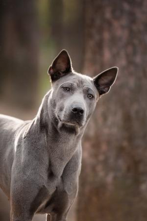 grey puppy pug dog on the foge floor.