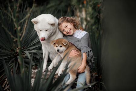 Beautiful little curly girl with Akita dogs sitting Stock Photo