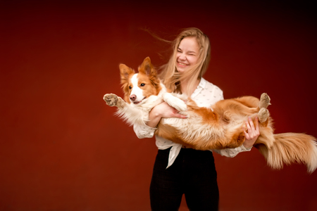 red and white cute dog border collie in hands of girl little dark Banque d'images