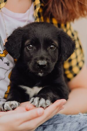 A girl is a volunteer with a puppy on her hands. A dog from a dog shelter. Imagens