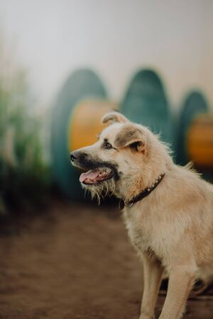 A Close up image of an adopted terrier mix pup sitting in the grass looking at the camera Imagens