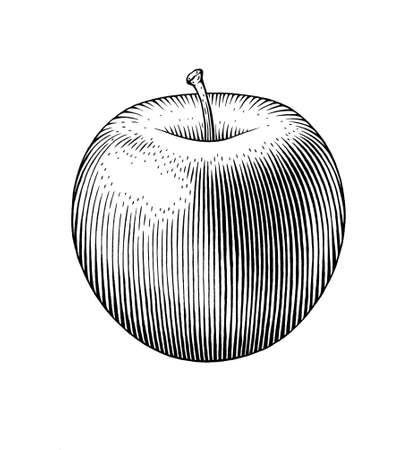 Hand drawn ink black and white illustration of an apple.