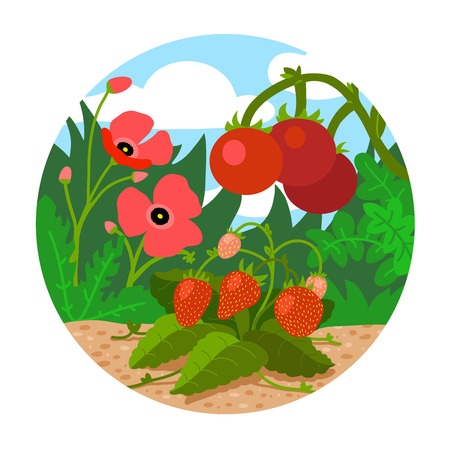 garden scenery: Circle locations, little landscape (field with red flowers, strawberries, tomatoes and green grass)