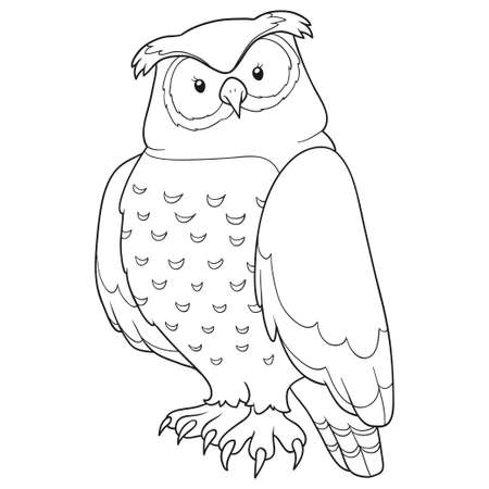 night owl: Coloring book (owl)