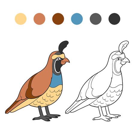 quail: Libro para colorear (codorniz)