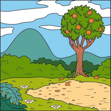orange tree: Vector illustration, natural background (glade and orange tree)