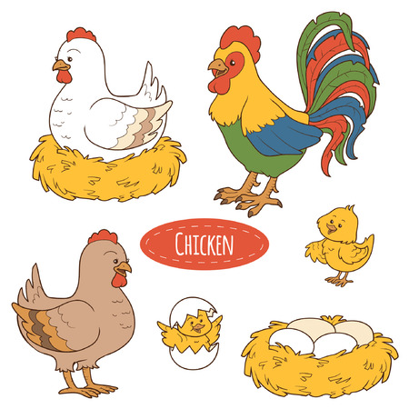cartoon chicken: Set of cute farm animals and objects, vector family chicken
