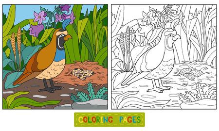 CODORNIZ: Juego para los niños: Libro de colorante (codornices)